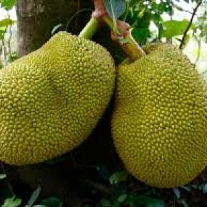 You always keep saying about jackfruit but do you know its benefits?